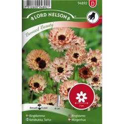 Ringblomma, Bronzed Beauty frö 1-pack