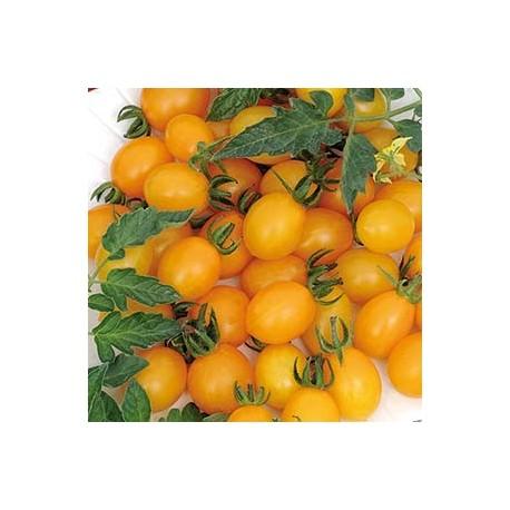 Tomat 'Ildi' frö 1-pack