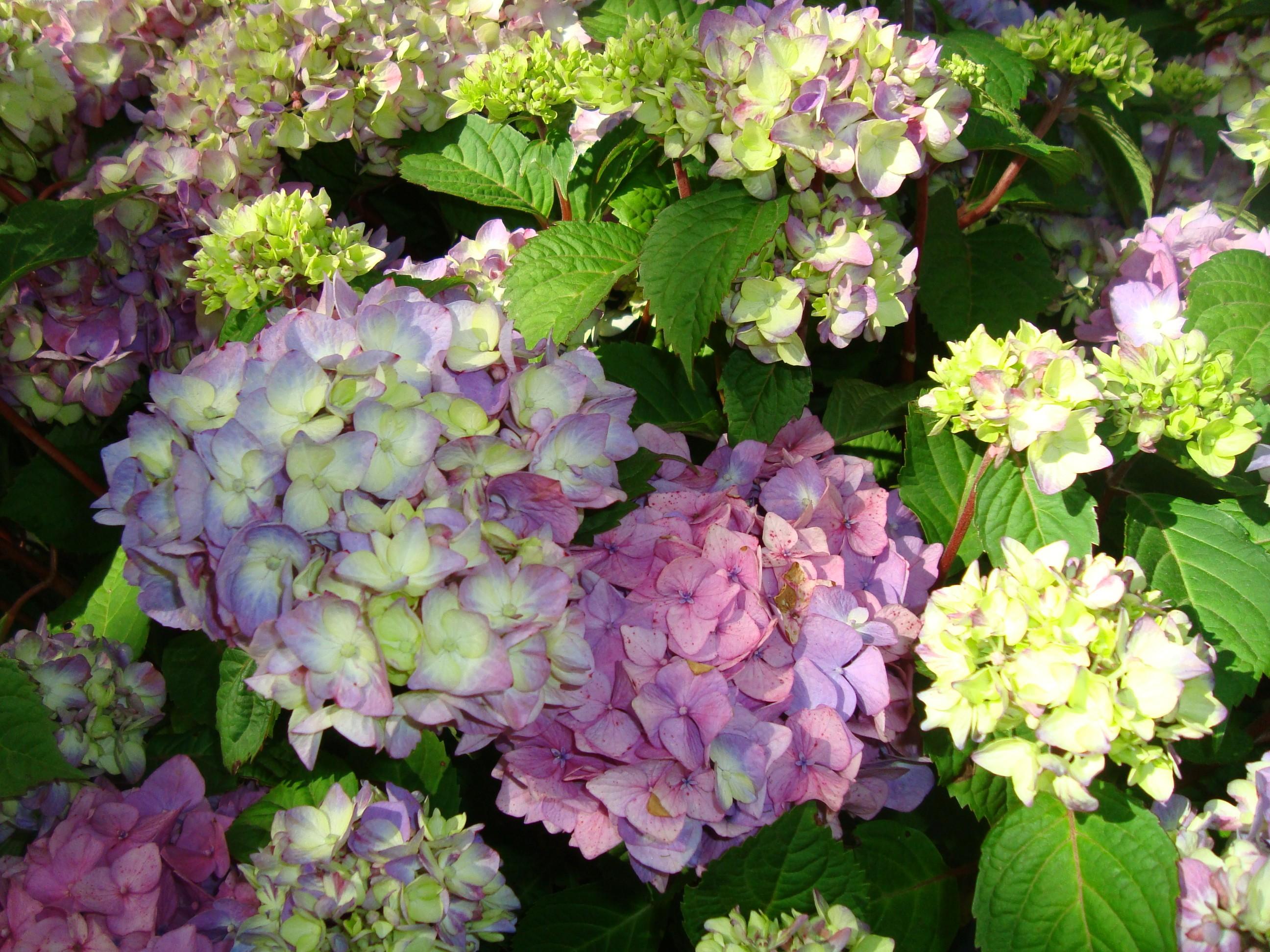 Beställ dina trädgårdsväxter nu, så levererar vi till våren vid lämplig tid. Vi garanterar alltid högsta kvalitet, till förmånligt pris.