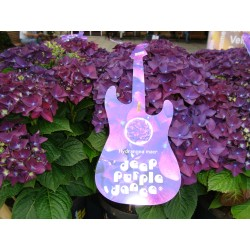 HORTENSIA 'DEEP PURPLE DANCE' 1-PACK