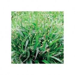 VÅRFRYLE 'IGEL' gräs 1-PACK