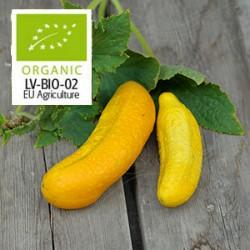 Gurka 'Gele Tros' frö 1-pack