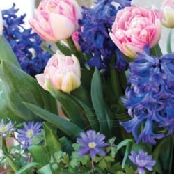 LM Tulp/Hyac/Anem 'Romantic Garden' 23st/förp