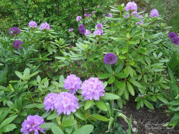 Hedenblads Trädgård, bild 1