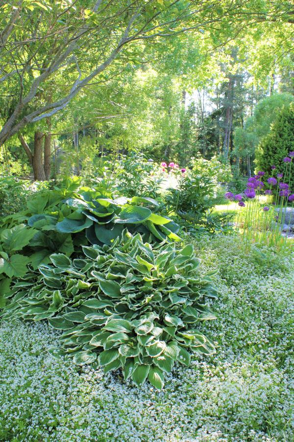 Trädgårdsform, bild 3