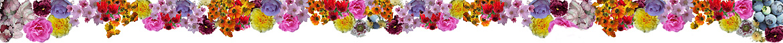 Beställ dina trädgårdsväxter nu, så levererar vi till våren vid lämplig tid. Alltid högsta kvalitet till förmånliga priser.
