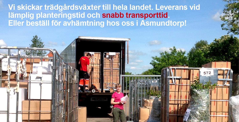 Vi levererar trädgårdsväxter till hela landet. Leverans vid lämplig planteringstid. Snabb transporttid. Eller beställ för avhämtning i Asmundtorp.
